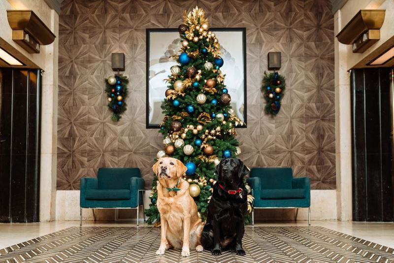 Two dogs sit in front of a beautifully decorated Christmas tree at the Fairmont Hotel Vancouver